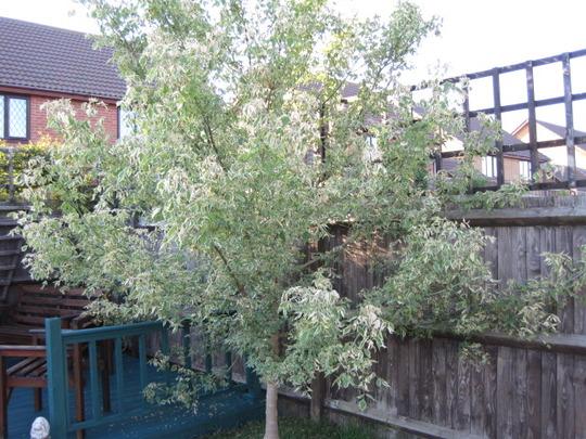 Unknown little tree