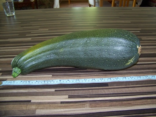 Hercules the Courgette