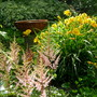 Astilbe and Stelle d'Oro Daylilies and the Sparrow Spa