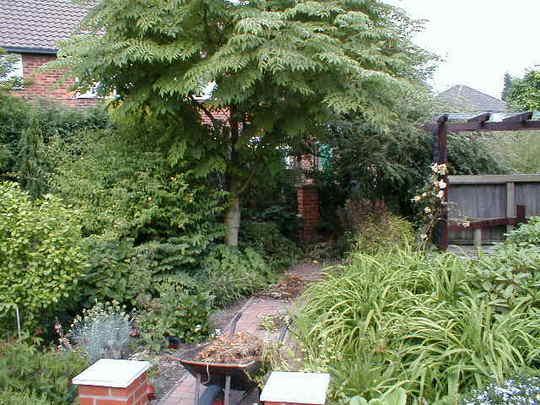 Back Garden (Aralia elata (Angelica Tree))