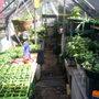 greenhouse spring 07