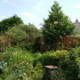 Latest picture of back garden