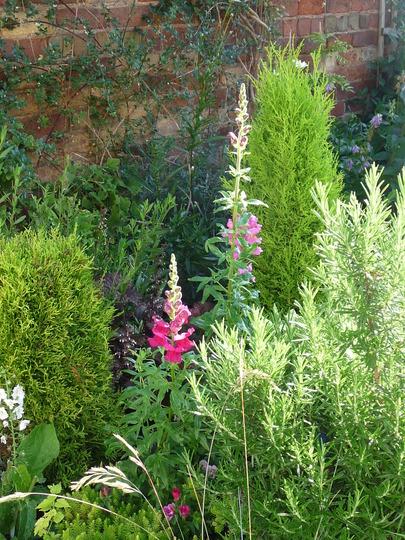 A garden pic