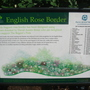 English Rose Border - Regent's Park, London - June 2009