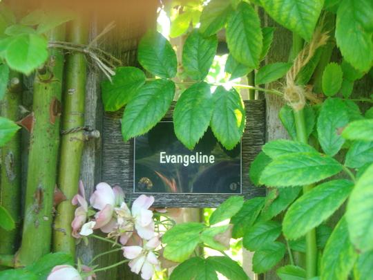 Another useful sign - Regent's Park - June 2009