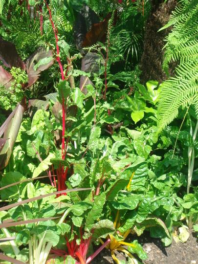 Tropical planting round the Triton fountain - Regent's Park, London - June 2009