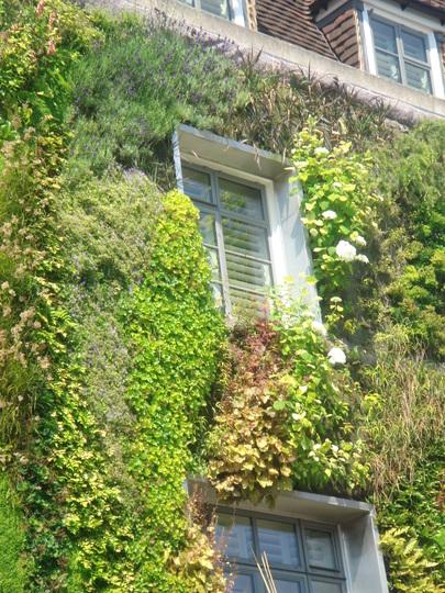The Driver, London - vertical garden - June 2009