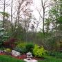 Viburnum plicatum tomentosum for Dawnsaunt
