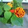 Garden_pics_055