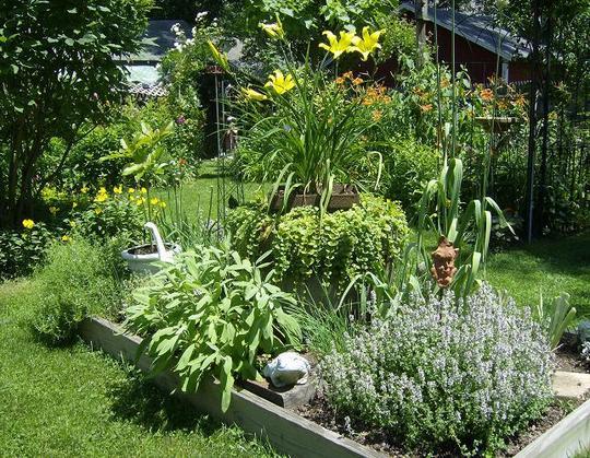 Herb Garden - July 6, 09
