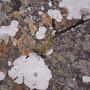 Lichens, Highland Wildlife Park, Kingussie, Scotland, June 2nd 2009