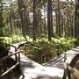 Raised Forest Walkway, Landmark Forest Park.