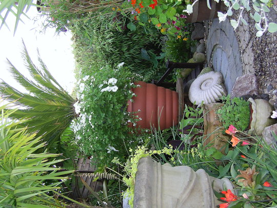 BIG BIG POTS FOR BIG PLANTS IN A LITTLE GARDEN (Cycas revoluta)