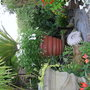 BIG BIG POTS FOR BIG PLANTS IN A LITTLE GARDEN (Cycas revoluta)