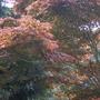 Abbotsbury Gardens, Dorset, Tree Canopy