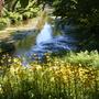 Trevarno Gardens Cornwall, River & Lake