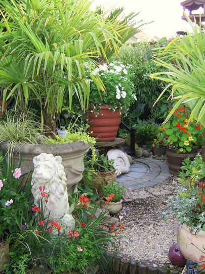 BIG POTS....little garden ( the right way up this time!) (Cycas revoluta)