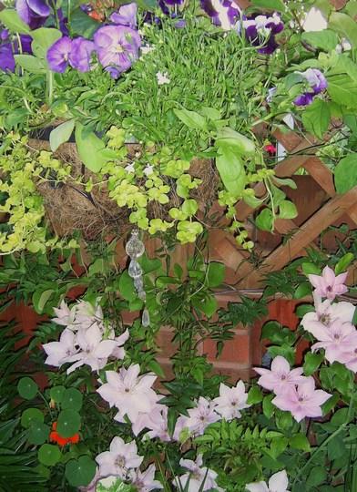 Happy Garden...even the Clematis is smiling!