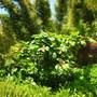 Quail_bontanical_gardens_07_07_09_016