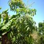 Quail_bontanical_gardens_07_07_09_013