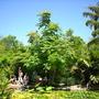 Quail_bontanical_gardens_07_07_09_017
