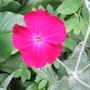 Garden_jun_07_002
