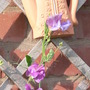 1st Sweet Peas to open