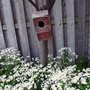 Feverfew & Birdhouse (Tanacetum parthenium)