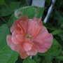 2009_07_09_goy043