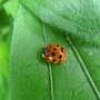 Garden Helper - Ladybug
