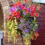 One of this year's hanging baskets
