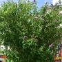 Plants around my area