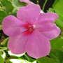 2009_07_09goy_061