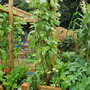 Small gardens - Learning to grow, growing to learn