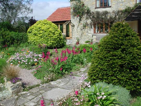 Part of the front garden (Gladiolus communis subs. byzantinus)