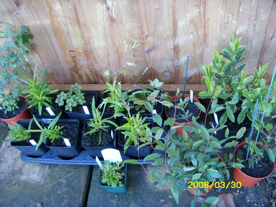 Recent purchases awaiting planting!