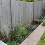 My strip of garden