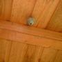 Wood Wasps Nest