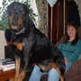 Bud and Shirl (Canis domestica sp. Rottweiler)