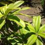 Quail_bontanical_gardens_07_07_09_053