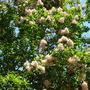 Quail_bontanical_gardens_07_07_09_087