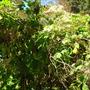Quail_bontanical_gardens_07_07_09_117
