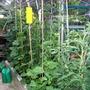 Greenhouse border
