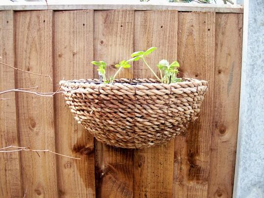 my new strawberry wall basket