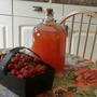 Strawberry wine......:o) (Fragaria)