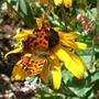 Butterfly_best.jpg