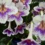 Rhs_hampton_court_flower_show..09.07._09_130