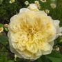 Rosa_the_pilgrim