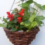 Hanging_basket