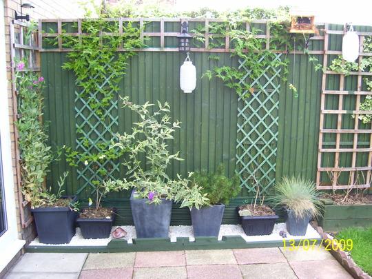 latest garden pic
